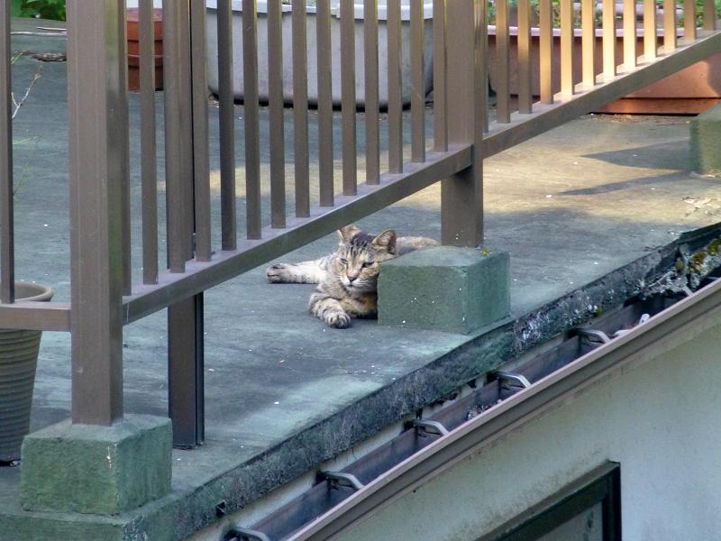 物干しベランダの猫2