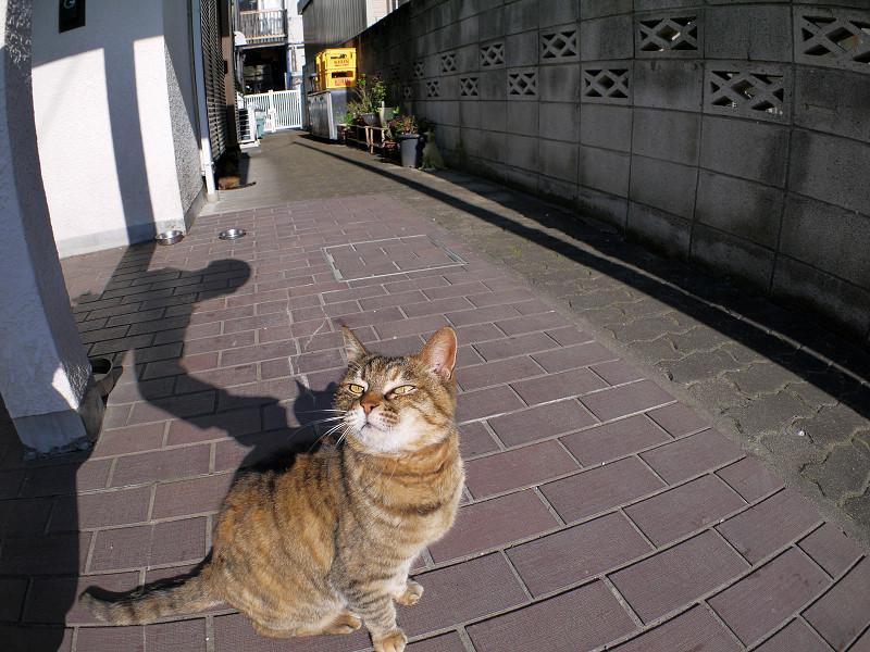 夕方のサビ柄猫2