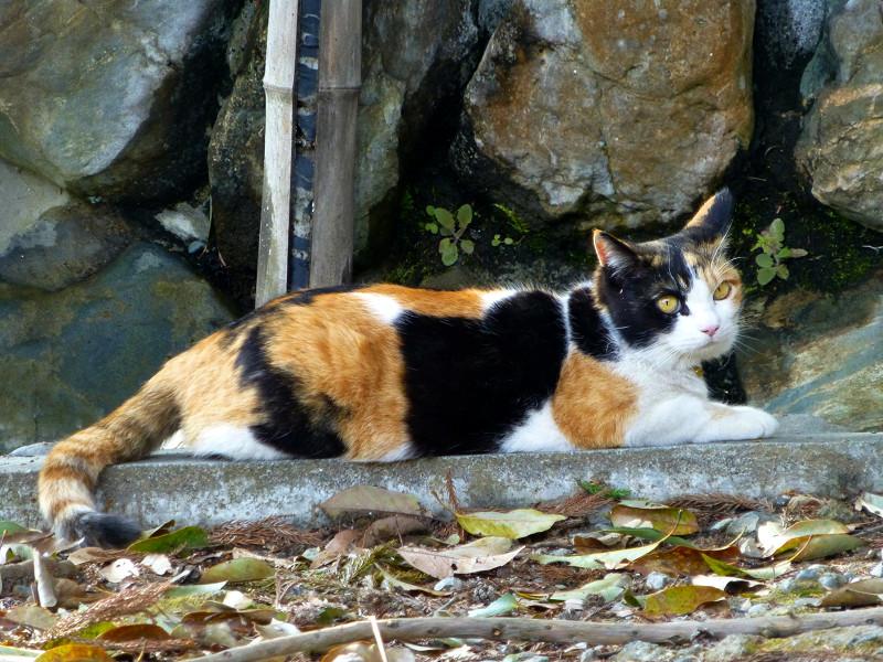 手水舎と三毛猫2
