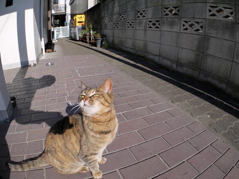 夕方のサビ柄猫3