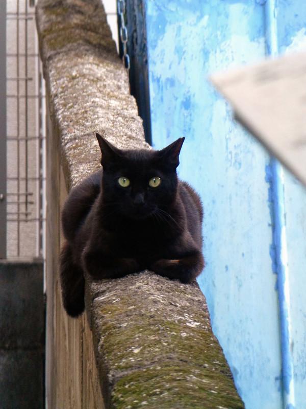 ブロック塀上の黒猫