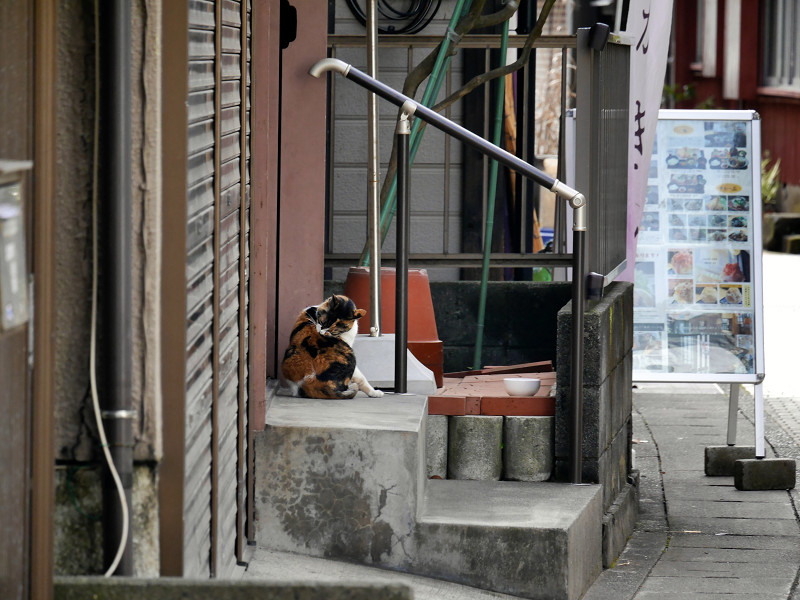 路地で毛づくろいの三毛猫1
