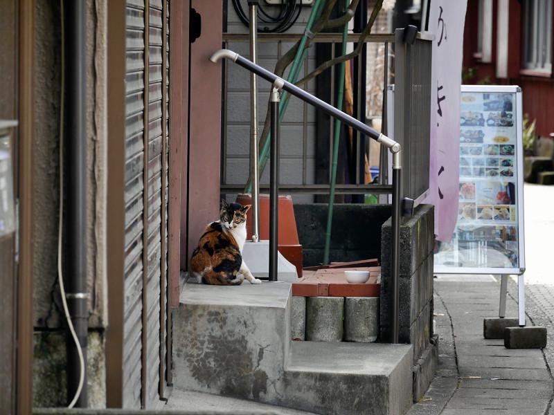 路地で毛づくろいの三毛猫2