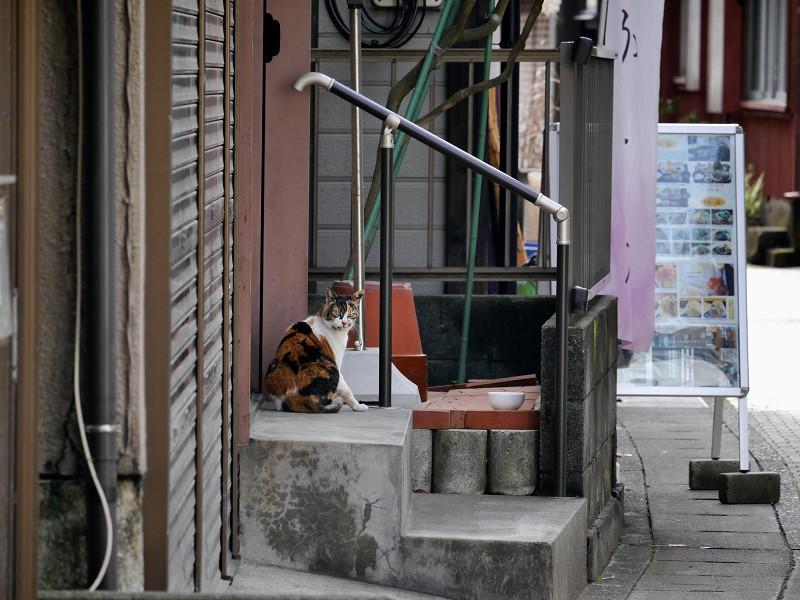 路地で毛づくろいの三毛猫3