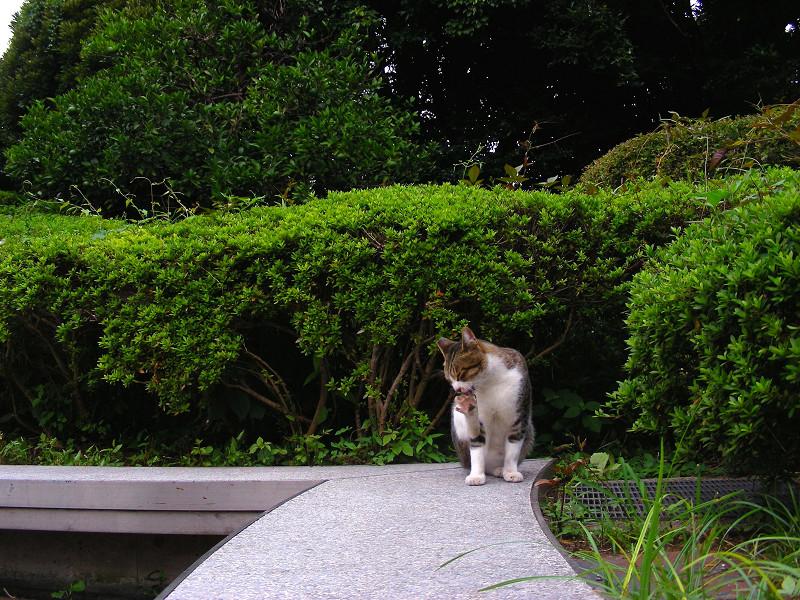 長いベンチとキジ白猫1