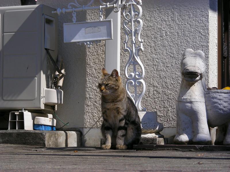 不満気に座るキジトラ猫1