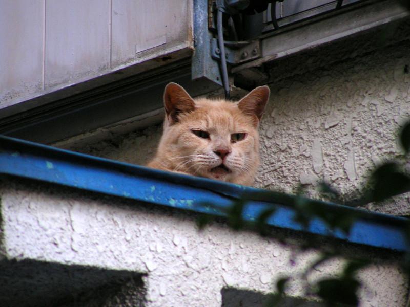 青い庇と茶トラ猫2
