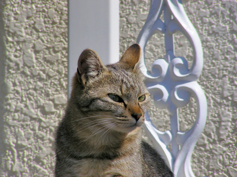 不満気に座るキジトラ猫2