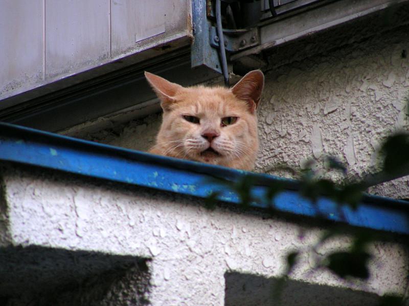 青い庇と茶トラ猫3