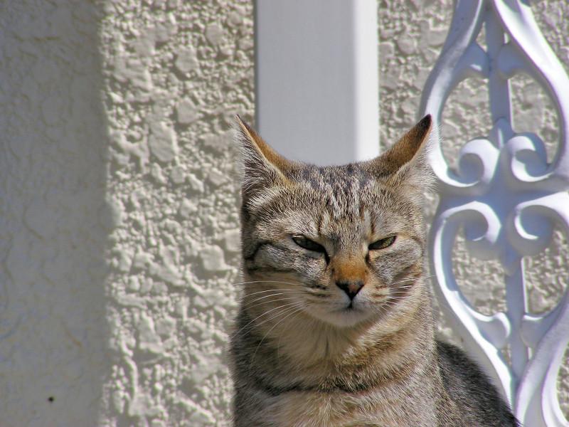 不満気に座るキジトラ猫3