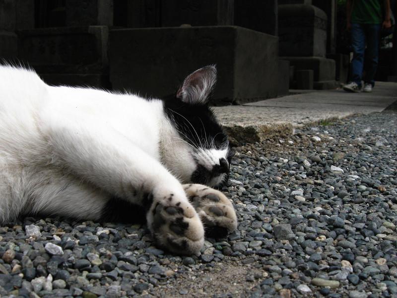 境内で寝ている白黒猫