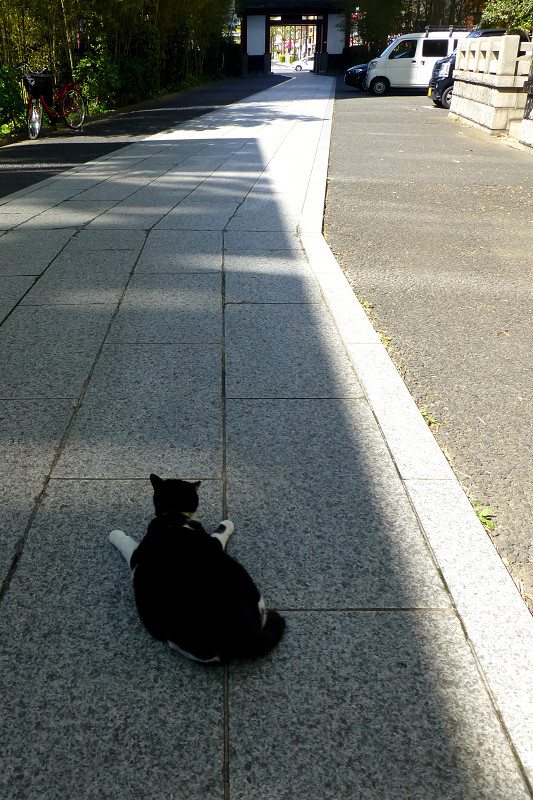 参道と黒白猫1
