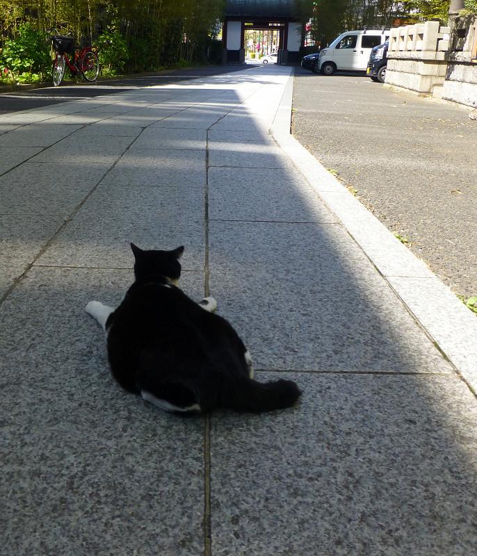 参道と黒白猫2