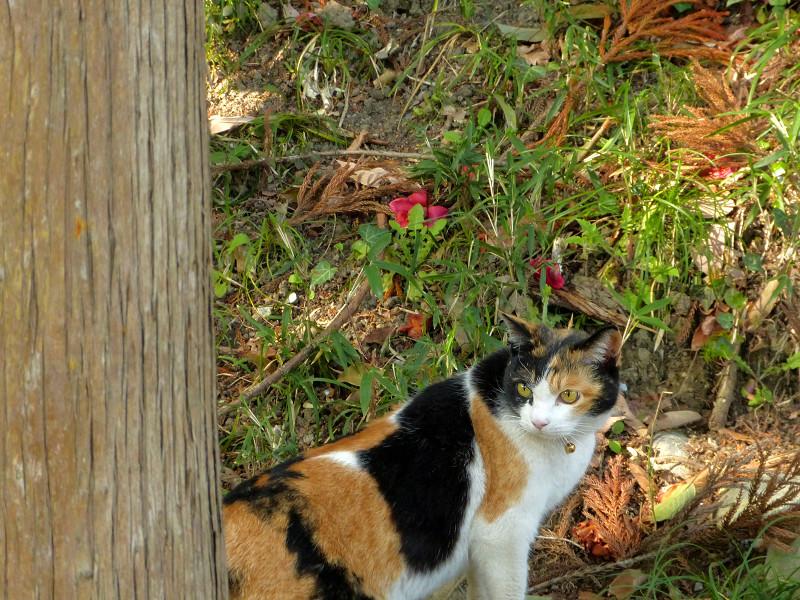 草むら斜面と三毛猫1