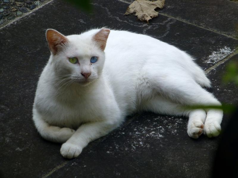 横になってる白猫3