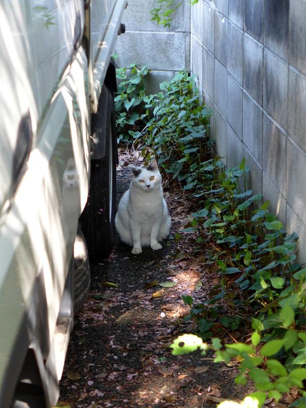 駐車場の白黒猫1