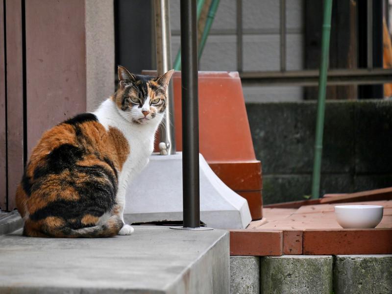 動き出した路地の三毛猫1