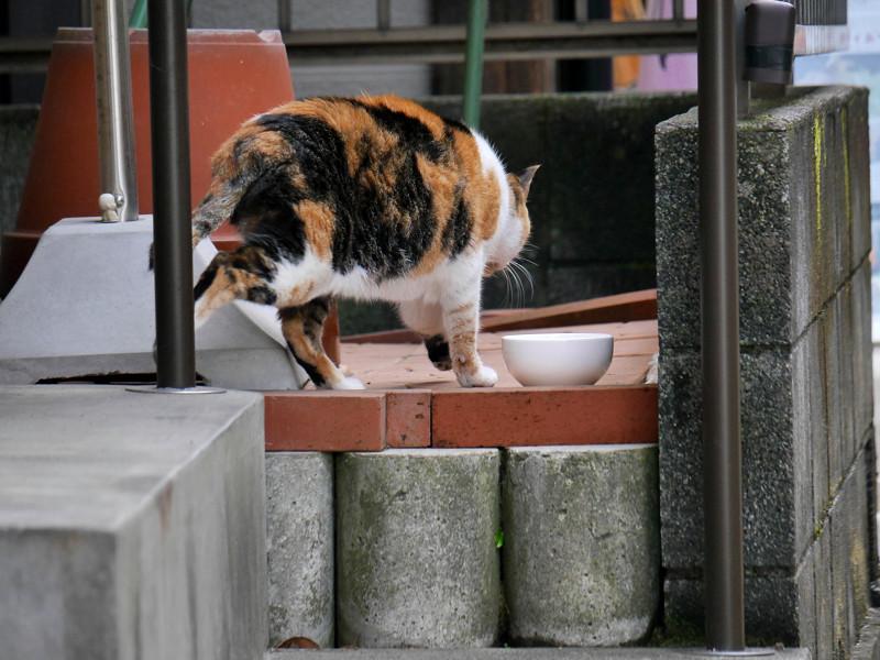 動き出した路地の三毛猫2