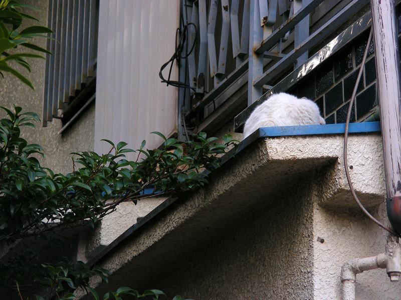 青い庇と白い猫1