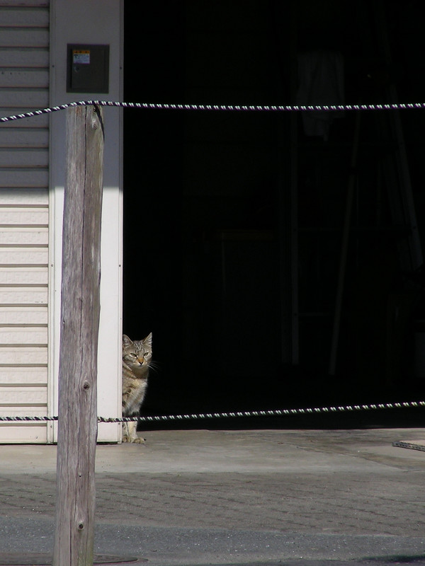 コントラストの猫1