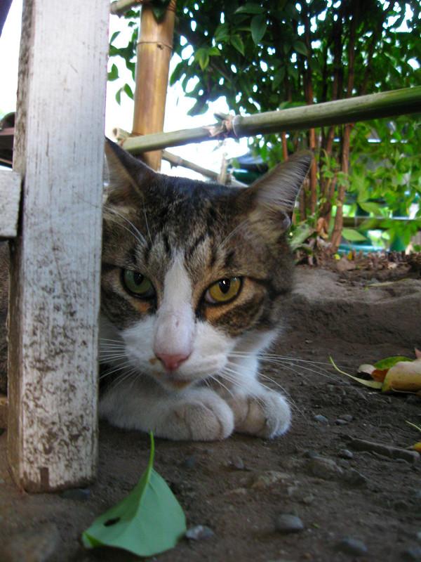 ベンチの陰から見てるキジ白猫1
