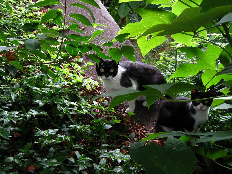 茂みの親子猫1