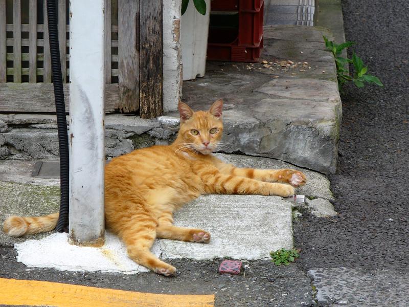 食後の茶トラ猫1