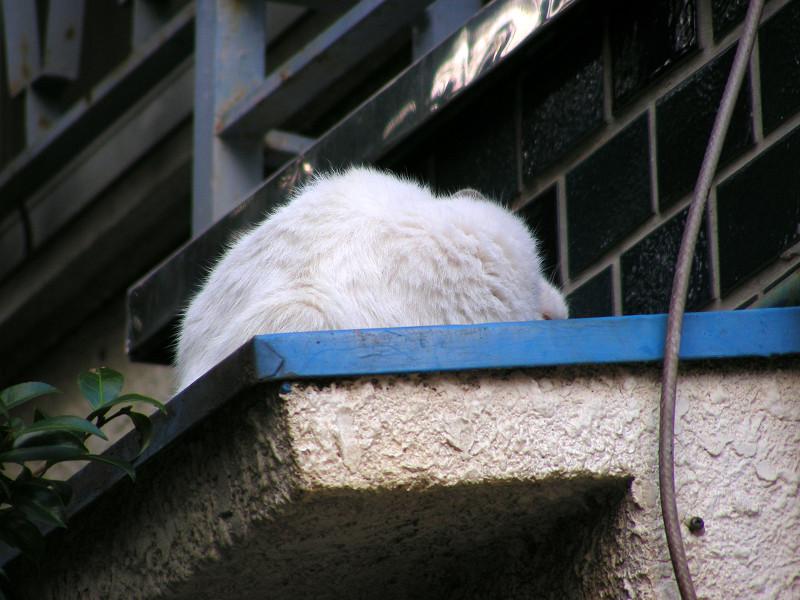 青い庇と白い猫2