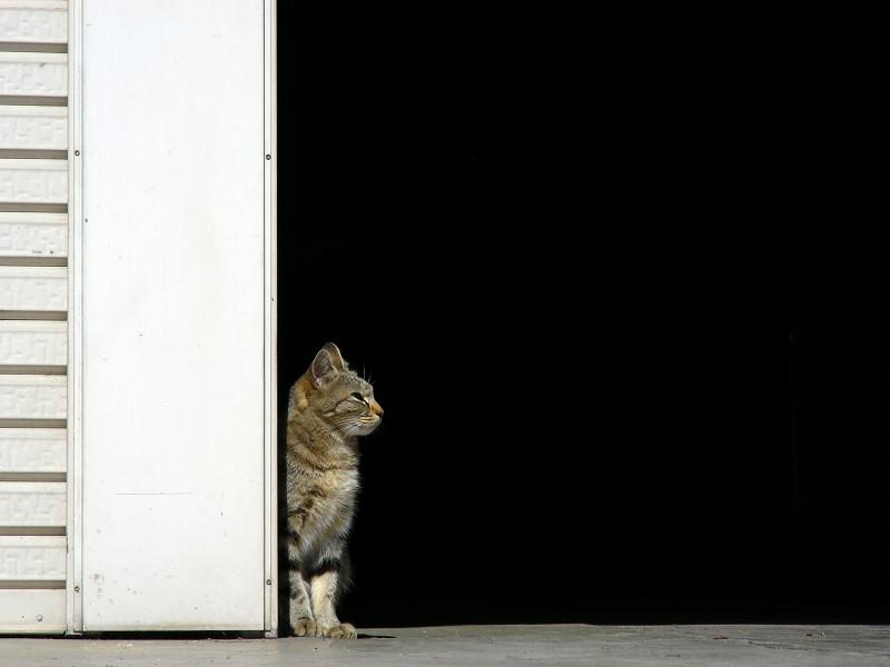 コントラストの猫2