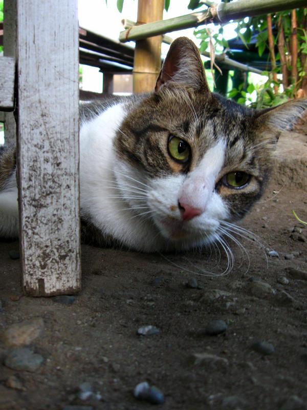 ベンチの陰から見てるキジ白猫2