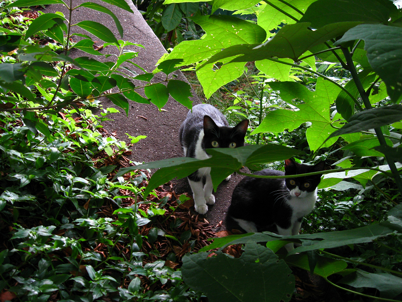 茂みの親子猫2