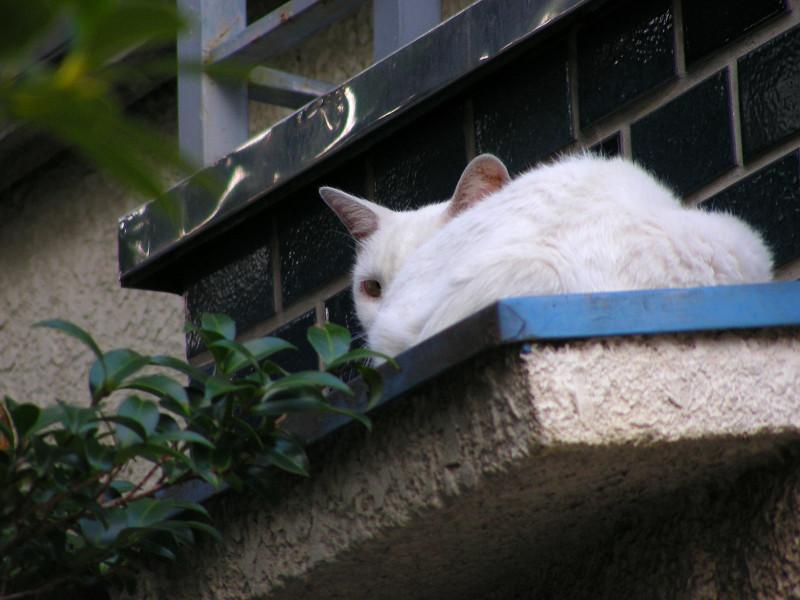 青い庇と白い猫3