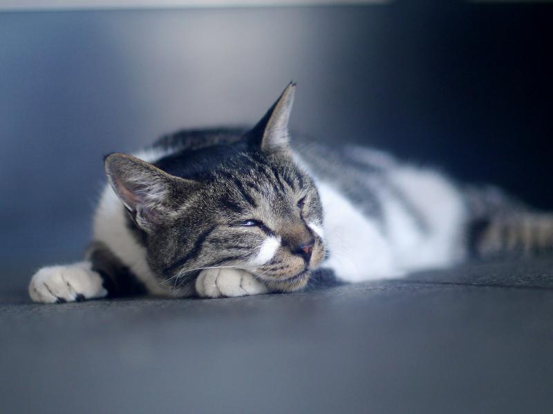 寝ているキジ白猫2