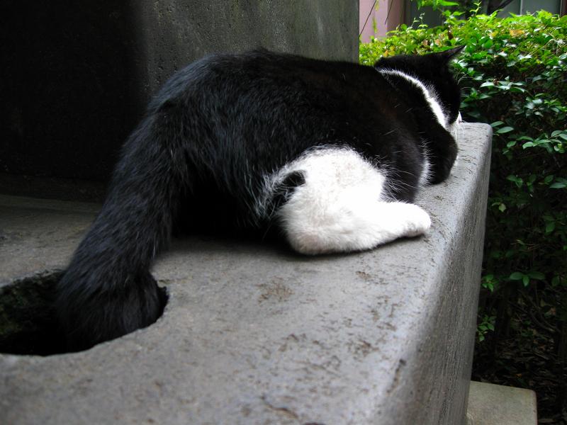 石碑で腹ばう黒白猫1
