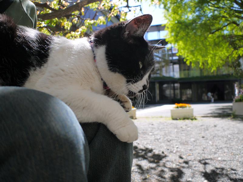 初夏の日差しと白黒猫1