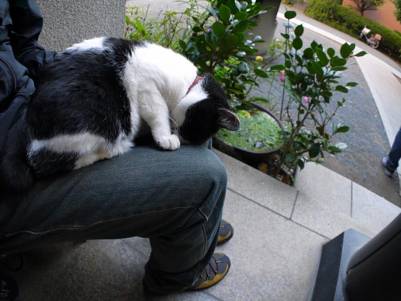 ゴメン寝白黒猫1