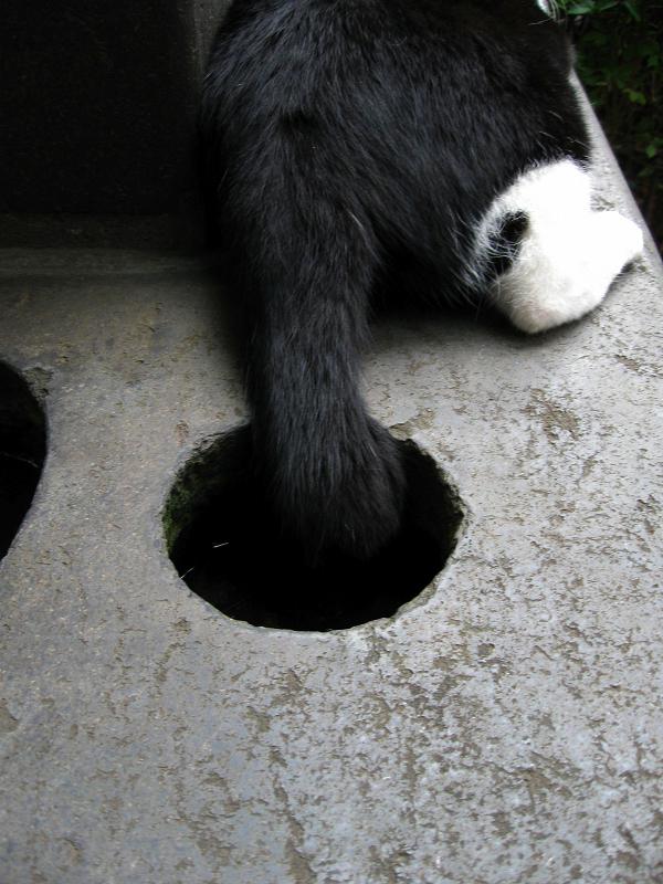 石碑で腹ばう黒白猫2