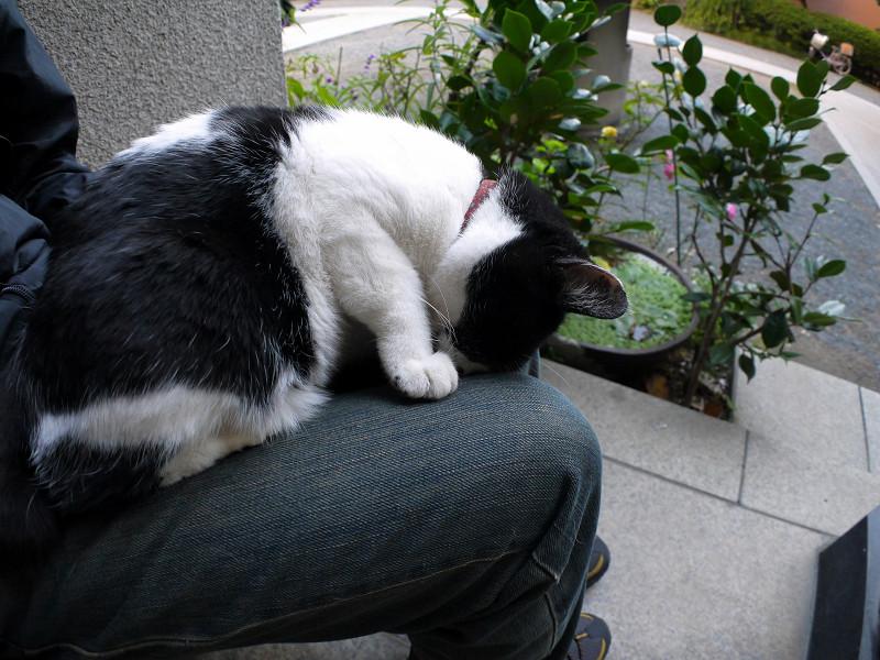 ゴメン寝白黒猫2