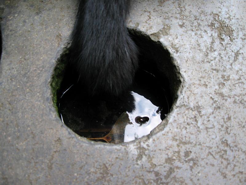 石碑で腹ばう黒白猫3