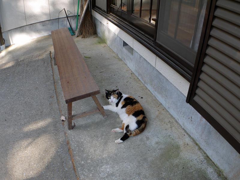 ベンチの横で横になってる三毛猫1