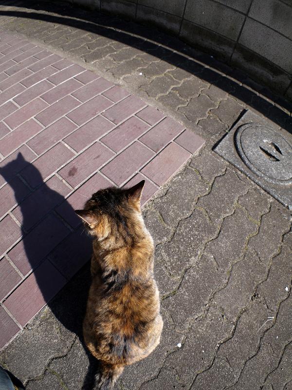 サビ柄猫の背中と影1