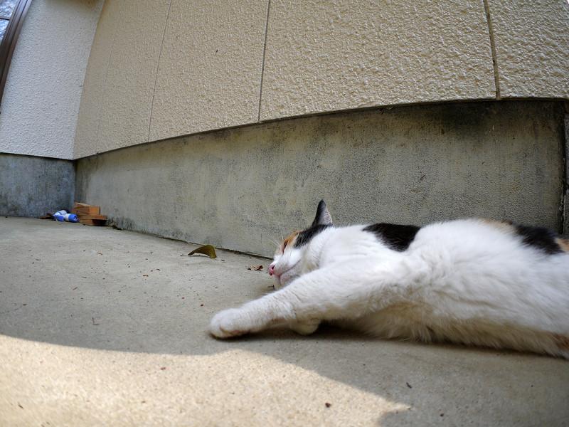ベンチの横で横になってる三毛猫2