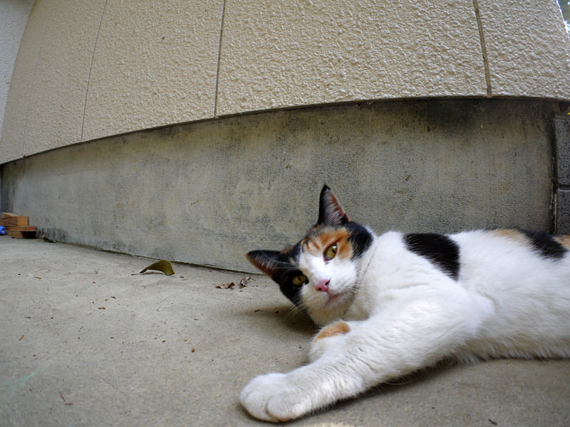 ベンチの横で横になってる三毛猫3