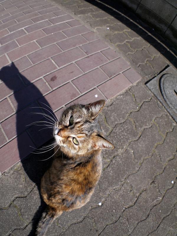 サビ柄猫の背中と影3