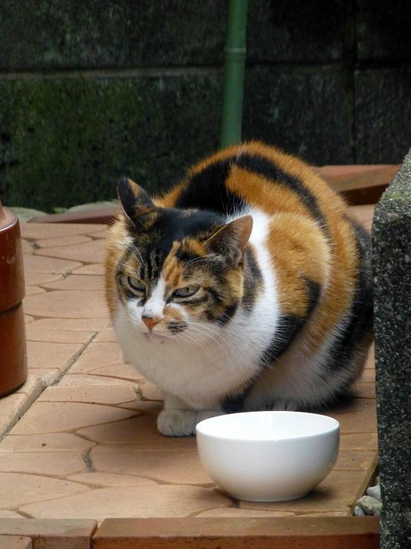 ご飯茶碗と三毛猫1
