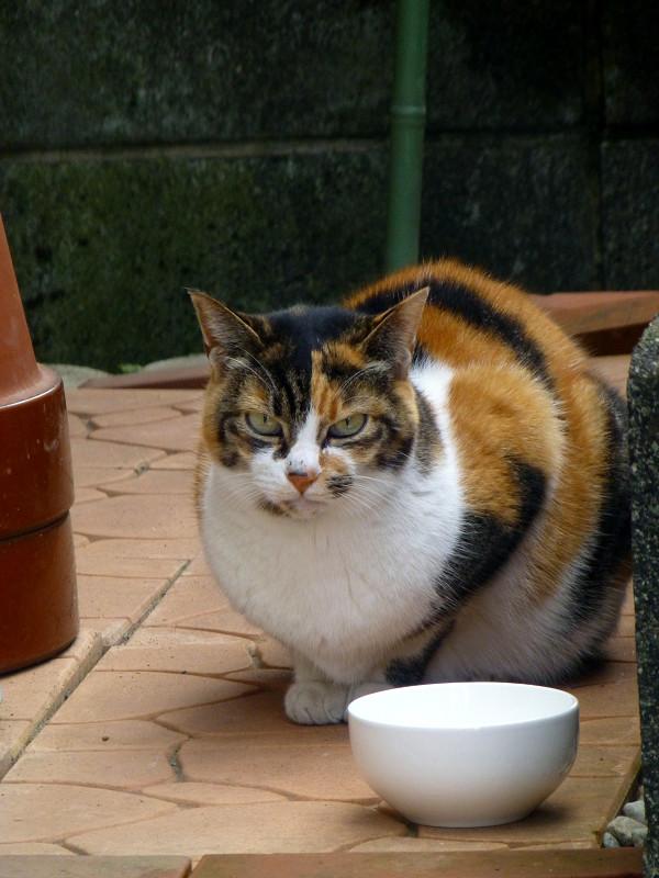 ご飯茶碗と三毛猫2