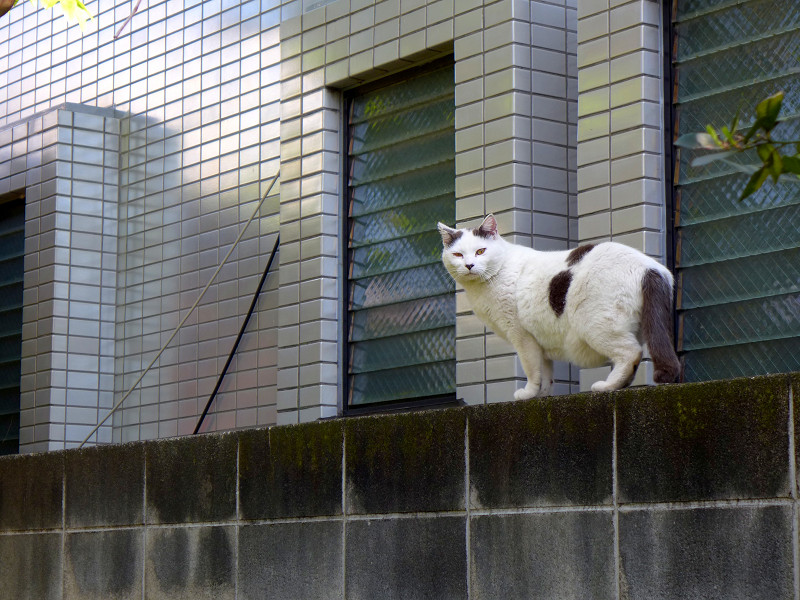 駐車場のぶち柄猫2