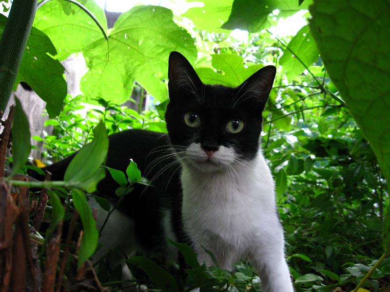 茂みの母猫1