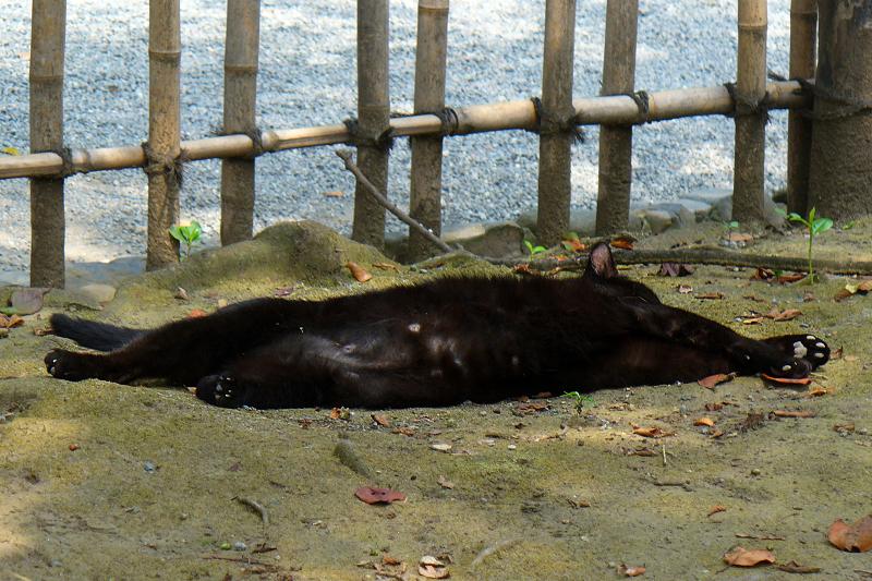 横になってる黒猫