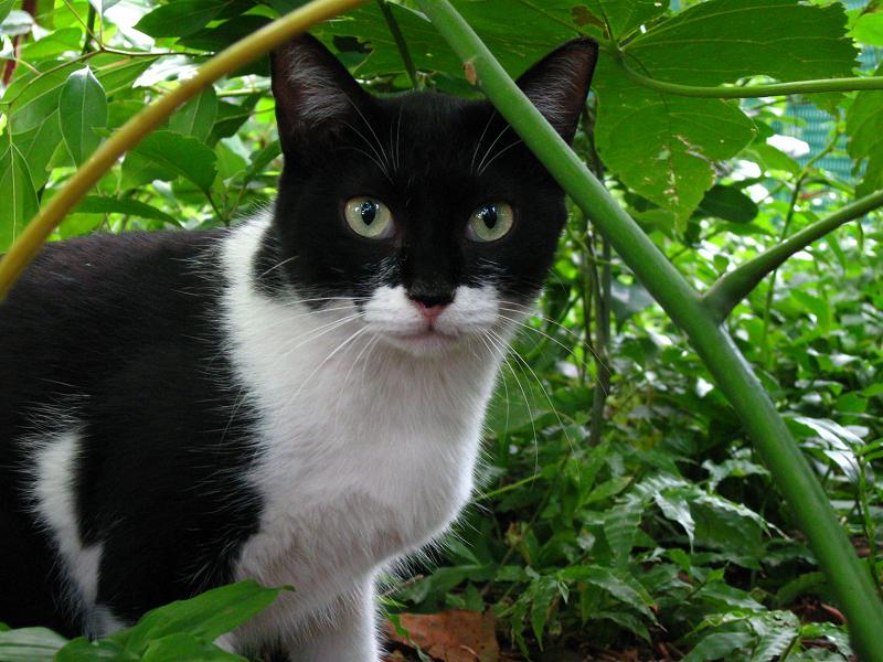 茂みの母猫2